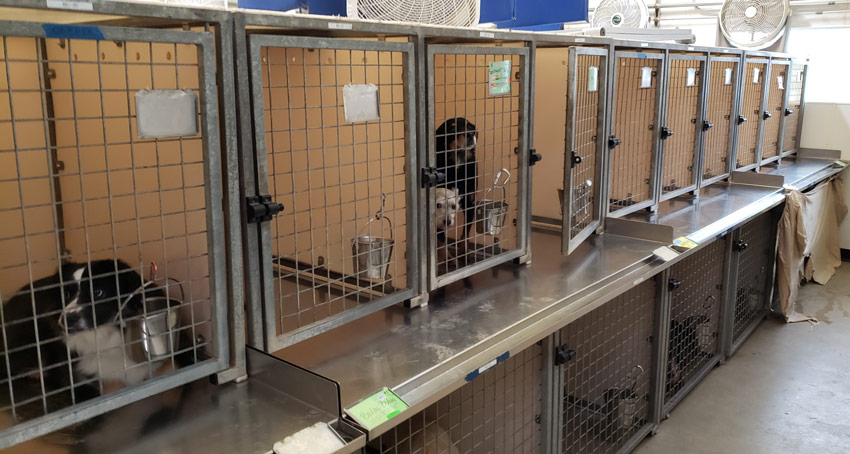 Stackable Kennels